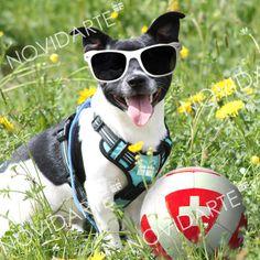 Social Media Plattformen, Boston Terrier, Giveaway, Sport, Dogs, Animals, Umbrellas, Company Logo, Scene