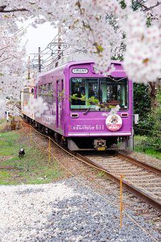 Flores de cerezo rosadas y tren rosado en Japón hermoso. Romantic
