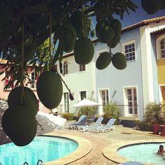Manga no pé, piscina, e casinhas coloridas. É muita delicia junto. rs #piscina #mangueira #bahia  #brasil - @camarim- #webstagram