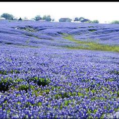 Beautiful!! In Ennis, Texas