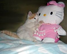 a kitty loves hello kitty Cute Cats, Funny Cats, Adorable Kittens, Pretty Cats, Alluka Zoldyck, Cute Memes, Sanrio Characters, Soft Grunge, Aesthetic Pictures