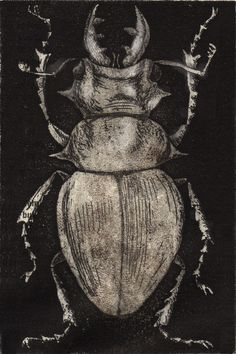 Grey Beetle on Black by Tennopent Sooster on Artfully Walls