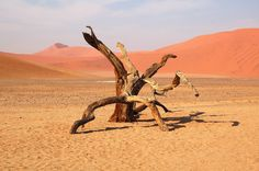 A friend of mine took this photo somewhere in the Namibian desert. As soon as I clapped eyes on it, I thought that it looked just like a...