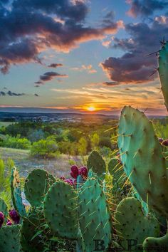 Hill Country sunrise- Boerne, TX