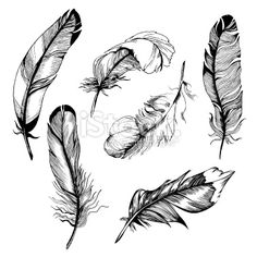 feather set Ilustracja wektorowe grafika royalty-free