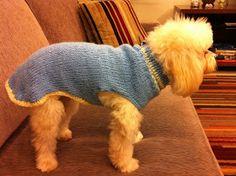 Koisas da Kaká: PAP - Roupinha para cachorro Knitted Dog Sweater Pattern, Dog Coat Pattern, Knit Dog Sweater, Dachshund Sweater, Mini Dachshund, Dog Clothes Patterns, Coat Patterns, Diy Dog Collar, Knit Baby Booties