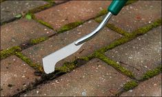 For backyard! Grass Weeds, Angle Of Attack, Lee Valley, Plant Projects, Paving Stones, Garden Shop, Growing Plants, Outdoor Rooms, Weeding