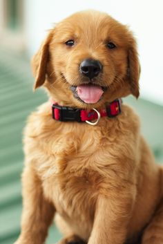 #puppy For more fluffy dog cuteness check out http://prettyfluffy.com/