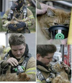 Funny pictures about Firefighter saving a cat. Oh, and cool pics about Firefighter saving a cat. Also, Firefighter saving a cat. Cute Kittens, Cats And Kittens, Crazy Cat Lady, Crazy Cats, Amor Animal, Faith In Humanity Restored, Cat Life, Cat Memes, Animal Rescue