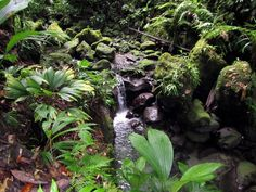 Dominica - Rainforest by Gary Sheaffer on 500px