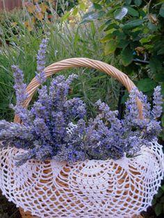 Lavender Sachet and Potpourri Lavender Cottage, Lavender Garden, French Lavender, Lavender Blue, Lavender Fields, Lavender Flowers, Purple Flowers, Beautiful Flowers, Lavender Crafts