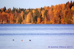 Jemina Staalon Veden vuosi 2: Bodom, Bodom, Bodom - kesän iloittelua Bodom-järvellä