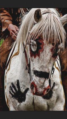 Comanche horse