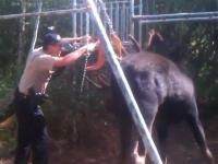 Video: Utah deputy frees moose stuck in chains of swing - The Denver Post