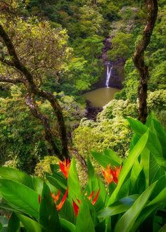 Glimpse of Eden - A waterfall along Road to Hana in Maui, Hawaii! Mother Earth, Mother Nature, Big Island Volcano, Road To Hana, Maui Hawaii, Photos Of The Week, Heaven On Earth, Beautiful World, Beautiful Landscapes