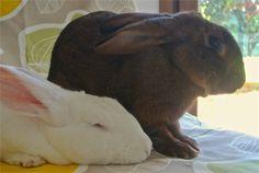 my bunnies  Conigli in forma con uno snack nutriente - VanityFair.it