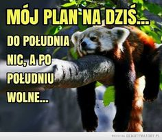 Plan na dziś –  MÓJ PLAN NA DZIŚ...DO POŁUDNIA NIC, A PO POŁUDNIU WOLNE... Funny Mems, A Funny, Really Funny, Motto, Einstein, Haha, Funny Pictures, Jokes, Positivity