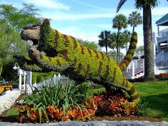 Tiger Topiary