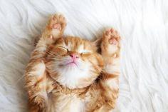 Photographic Print: Cute Little Red Kitten Sleeps on Fur White Blanket by Alena Ozerova : 24x16in