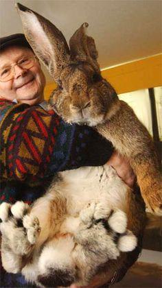 I DO believe in the Easter Bunny!!!!   I DO....I DO.....I DO!