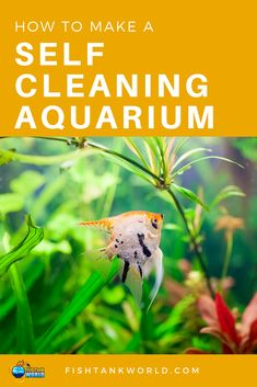 How to make a self cleaning aquarium. How a self cleaning fish tank works and why you want to have a self cleaning aquarium. What equipment you need, how to maintain it and the drawbacks of a self cleaning fish tank.
