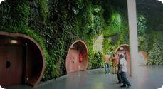 De verticale tuin: van natuur naar steden - Dutch Impressive Green