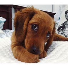 Diesem treuherzigen, neckisch liebevollen Blick kann man gar nicht widerstehen. Nein nein nein ... so süß!!!