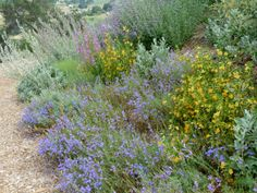 Designing your Garden with California Native Plants | Patch