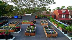 Johanne Daoust's #Roof-top #vegetable #garden | Toronto, Ontario | Canada