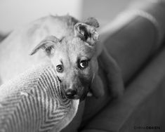 Here's what you need to know before you bring a new puppy home from a shelter.    Dog photography by Emma O'Brien award winning portrait photographer Shelter Puppies, Rescue Puppies, Dogs And Puppies, Photography Ideas At Home, Dog Photography, Dog Portraits, New Puppy, Dog Photos, Photoshoot Ideas