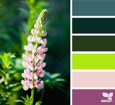 Lupine color from Design Seeds Colour Pallette, Color Palate, Colour Schemes, Color Patterns, Color Combos, Design Seeds, Crazy Colour, Color Studies, Color Blending