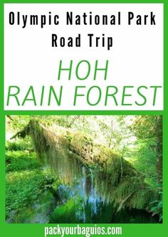 Olympic National Park | Hoh Rain Forest | Road Trip | Washington State travel | Ruby Beach | Quinault Rain Forest | hiking