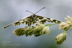 Fly butterfly! Fly! by JolandaBaars #nature #photooftheday #amazing #picoftheday