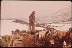 """Frank Starbuck, Last of the Old Time Ranchers near Fairview Manages a Spread of 1300 Acres and 400 Head of Cattle. He Does It Alone Because It Is Too Difficult and Expensive to Get Help. Starbuck Finds It Easier to Feed His Livestock from a Horse Drawn Wagon or Sled than from a truck or tractor"", 10/1972 - U.S. National Archives"