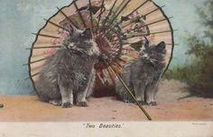 Cats Under Japanese  Umbrella OLD Antique Postcard | eBay
