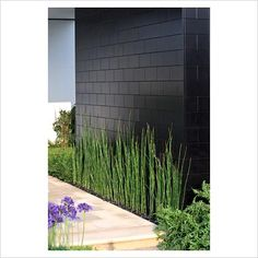 horsetail against stone wall - linear