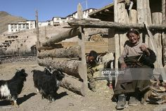 LHASA, CHINA - APRIL 5: (CHINA OUT) A Tibetan woman twists wool in front of her house while her grandsons herd sheep on April 5, 2005 in Lhasa of Tibet, China. Most of the Tibet nomads keep the custom of weaving and wearing handmade clothes. The Tibetan Sheep Wool is an ideal warm-keeping material in the plateau area. (Photo by China Photos/Getty Images)
