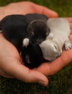 Oh... My... Goodness!... a hand full of baby Bunnies! Awe!