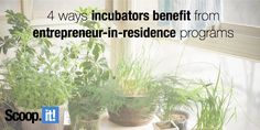 Brand, Ideas, Story, Style, My Life: 4 ways incubators and startup studios benefit from. Financial Assistance, Lead Generation, Content Marketing, Programming, Benefit, Entrepreneur, Studios, My Life, Diet