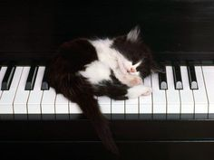 """""""I can't practice the piano, Mom, the kitten is sleeping on it!"""" """"Oh, okay...but as soon as the kitty wakes up, you better be practicing!"""""""