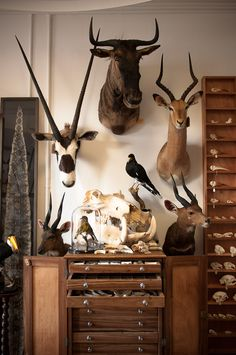 Interior of Mandibles, a natural history store in South Africa.    (Or: ideal future living room/study.)