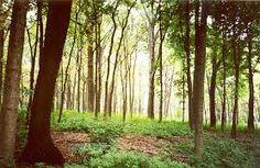 Image result for woodland mythology