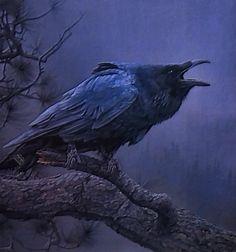 raven                                                                                                                                                     More