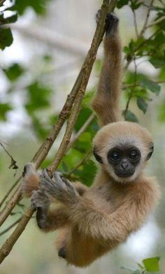 Baby Animal #mom #kids #jumblzar #cute #mommy #momtobe #children #baby #animals