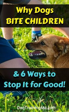 Learn why dogs bite children plus the 6 ways to stop it for good. No more being afraid to bring your pup around little ones! Stop your dog biting by reading this article!