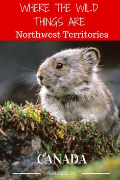 Wildlife and nature in the Northwest Territories of Canada. Travel Goals, Us Travel, Travel Images, Travel Photos, Discover Canada, Northwest Territories, Visit Canada, Travelogue, Canada Travel