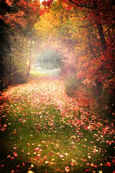 Autumn Magic: I can't help but wonder what lies at the end of this misty lane? Perhaps a curious portal...