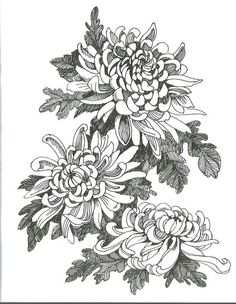Hand drawing chrysanthemum flower vector illustration - buy this vector on Shutterstock & find other images. Chrysanthemum Drawing, Chrysanthemum Flower, Japanese Chrysanthemum, Bird Drawings, Tattoo Drawings, Drawing Birds, Flowers Draw, Drawing Flowers, Tattoo Japonais