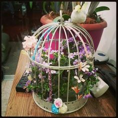 a cage for plants