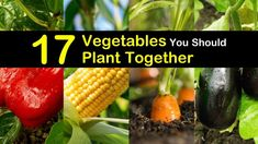 Companion planting guide for 17 different vegetables and its combinations. Companion Planting Guide, Vegetable Planting Guide, Home Vegetable Garden, Planting Vegetables, Growing Vegetables, Plant Guide, Veggie Gardens, Growing Okra, Regrow Vegetables